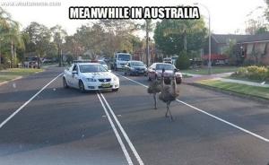 Oz important visitors
