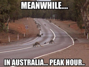 Oz Peak Hour