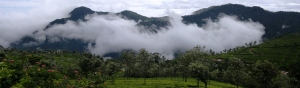 Nilgiri Hills TN