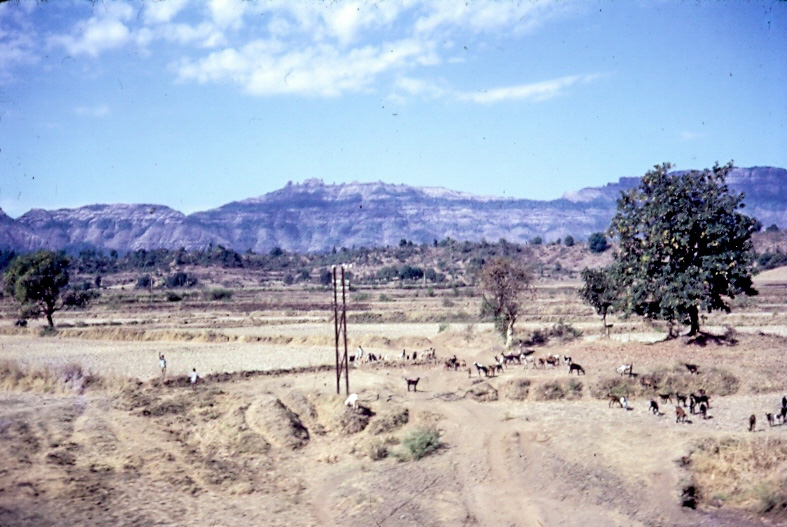 1968 Pune District Farmlands_edited
